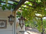 Go ahead, taste our grapes hanging overhead.