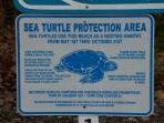 Help the turtles to find the sea!