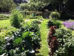 Wonderful Organic Garden for you to Enjoy! Yes, pick some vegetables to have with dinner.