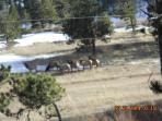 Elk Below House