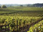 Local Vines View