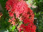 Ground Flora