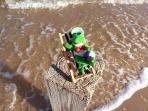 Coqui Frog Enjoying Day At the Beach