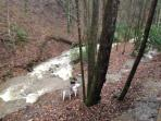 View from back deck - creek cascading down mountain North to South