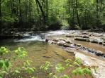 Gum Run - A Native Trout Stream Nearby