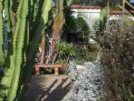 bench in drought garden