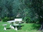 a corner of the garden where you can relax among the olive trees