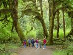 Hoh Rain Forest - A 'MUST SEE' during any visit and only 30 min. from the cabin!