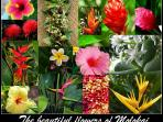 Lush tropical flowers are abundant throughout the Island (photos by Owner)