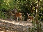 The wildlife oasis provided by this pristine property offers daily sightings of Black-tailed Deer