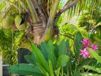 Grace Bay Townhomes - Tropical gardens and palm trees!