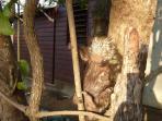 Jungle porcupine!!!