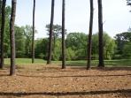 Back acreage