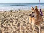 dog friendly beaches across the road