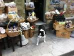 Great Food and Wine in Bolgheri