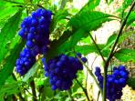 Down in the jungle on the farm are colorful flowers and berries