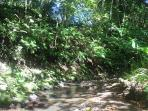 Nature beckons you to a nature walk up into SigaSiga's pristine forest along creeks