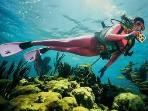 See our gorgeous coral reefs, most beautiful in the world.