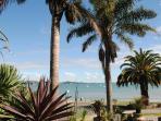 A subtropical paradise