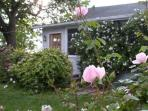 Lark's Cottage's rose and honeysuckle-covered entrance.