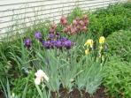 beautiful perennial gardens