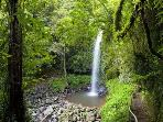 Dorrigo World Heritage National Park just a 15 minute drive