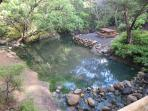 Kaitoke Hot Pools, Great Barrier Island