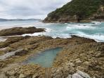 Mermaid pool, Kaitoke Beach, Great Barrier Island