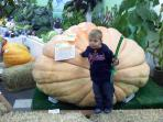 Palmer is famous for our giant veggies - 100 lb cabbages, 1,000 lb pumpkins!