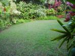 Dense foliage around front of house