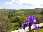 Panoramic views from the garden
