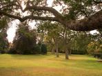 Stadacona Park - Across the Street