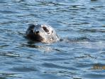 Seals can be seen near the wharf all year (or even lazing on logs across from us in winter!)