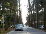 viale dei tigli . a 3 km.long alley, lined by secular trees, leading to the natural beaches and loke of torre del Lago