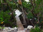 Mangrove Canopied Walk to Dock