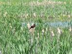 Circle O wetlands and great nature walks