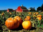 Fall - Apple and Pumpkin picking time! Fresh cider donuts, festivals and rides!