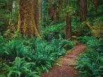 Redwood State National Park