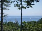 View from deck - sailboats on race day