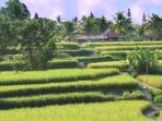 Our paved walkway through the rice fields. Bingtang supermarket is the distant terracotta roof.
