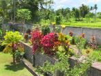 The temple garden and walkway with rice fields beyond and the pool area below.
