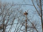 nest of herron bird