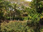 Tropical Garden View from Covered Lanai