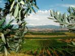 Stunning Tuscan countryside