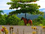 Horseback riding is offered in the area