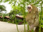 Our visiting sloth makes a regular appearance along with numerous wildlife and birds.