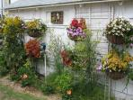 HERB GARDEN IN THE SUMMER, HANGING ON GARDEN SHED WALL
