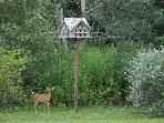 A young doe by one of the Birdhouses in the garden