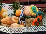 Pumpkin Carving on a BIG scale at the annual Half Moon Bay Pumpkin Festival in mid October