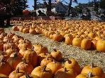 Pumpkin Fetival of the world!  That's what we say in Half Moon Bay in the Fall